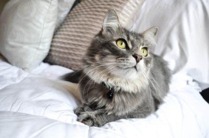 Dlouhá srst koček – krása, ale i závazek