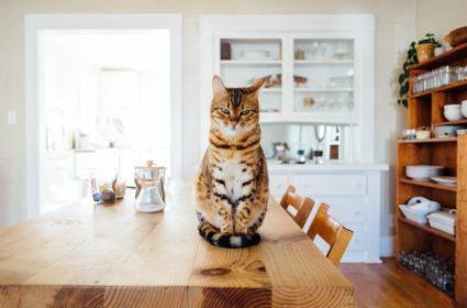 Suché krmivo pro kočky – jaké si mám vybrat?